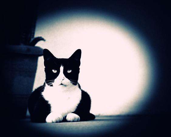 kissan kulttuurinen asema: kissat saduissa