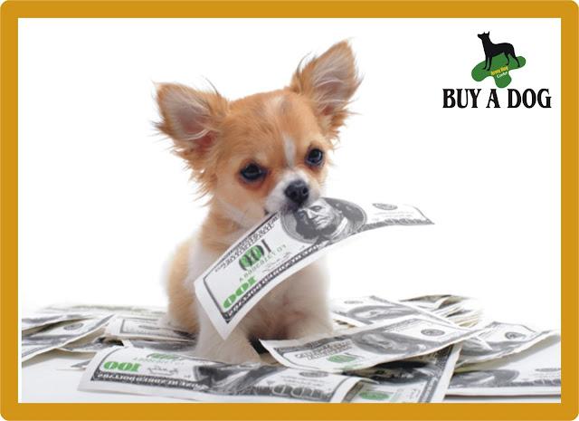 Buy A Dog