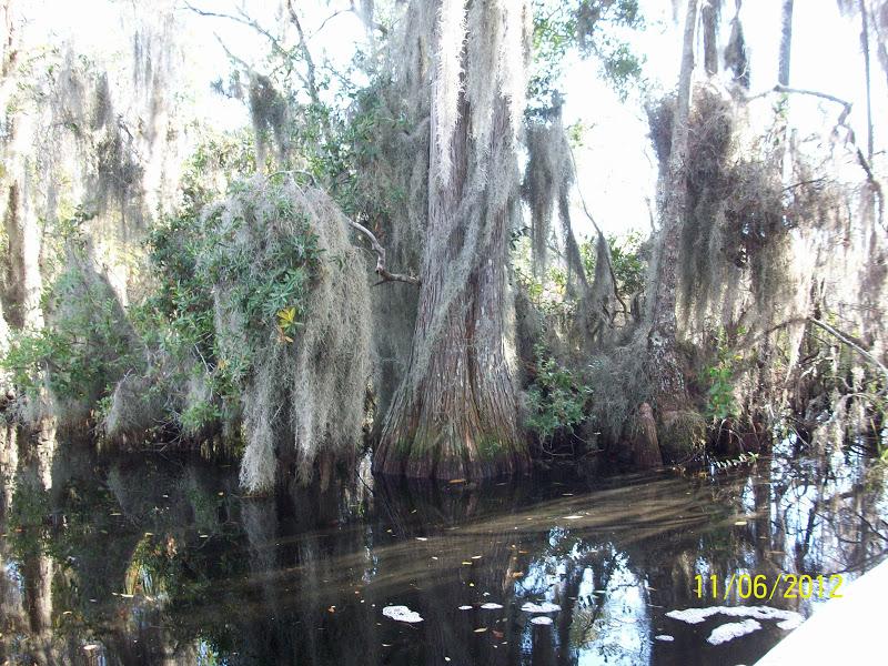 Okefenokee Swamp Park Tom & Bev's...