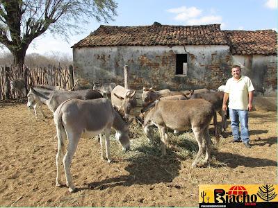 IMG 0044 - VÍDEO - Vice prefeito de município do sertão acolhe jumentos abandonados em seu sítio