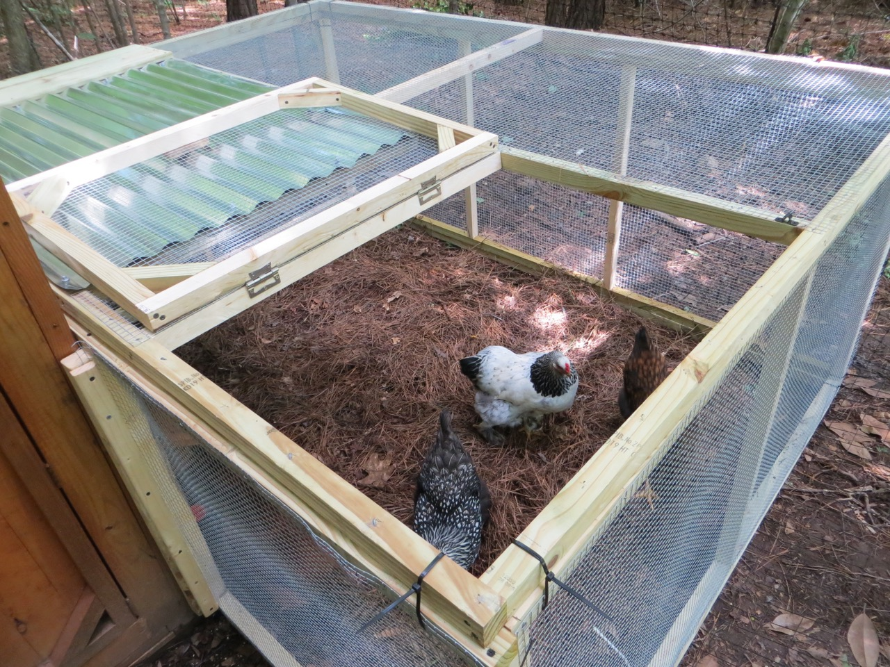 The project lady diy easy inexpensive chicken run for Chicken run for 6 chickens