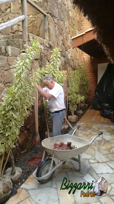 Bizzarri executando o paisagismo no Restaurante Recanto das Pedras em Atibaia-SP, plantando as mudas junto ao muro de pedra, com pedra moledo, e o piso com pedras cacos de São Tomé.
