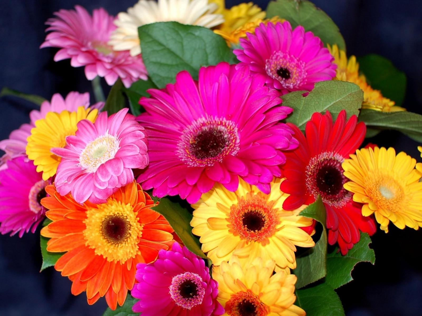 Romantic Flowers: Gerbera Flower