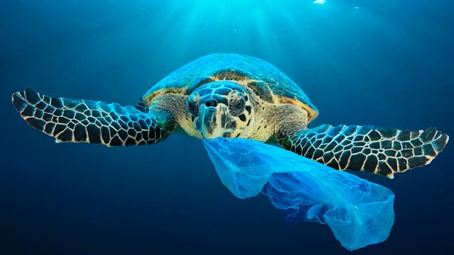 ¿Cuánto plástico causa la muerte de una tortuga?