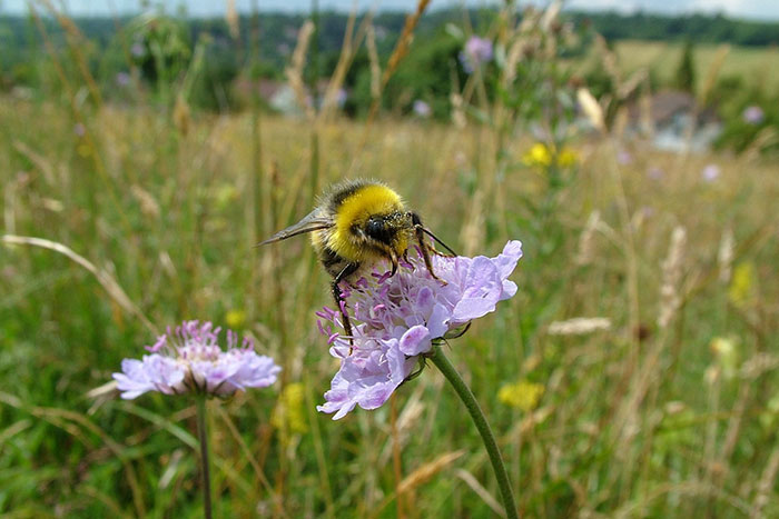 8 Little Things We All Can Do To Help The Bees Survive