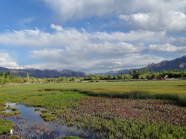 Shey Village in Ladakh
