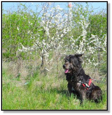 mit Hund durch den Frühling