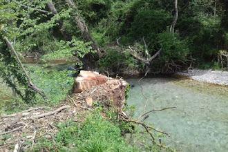 Έρχεται Ρεπορτάζ για την κοπή των δένδρων Κοζάνη Καστοριά χωριό Πλατανιά Βογατσικό Έρευνα-ρεπορτάζ του Νίκου Βάνη