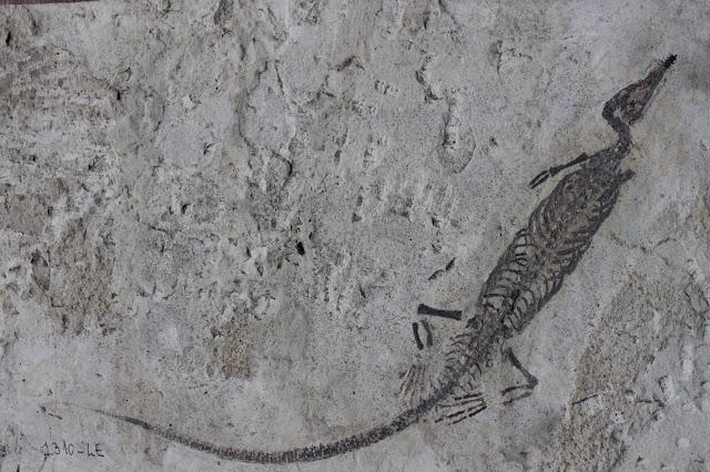 Mesossauro: O réptil marinho que viveu entre 230 e 290 milhões de anos atrás