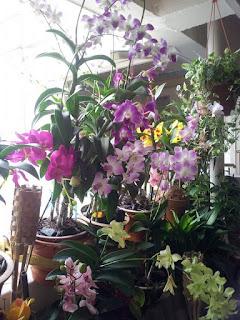 Cara Jaga Pokok Orkid Untuk Bunga Tahan Lama