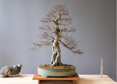 Cara Merawat Pohon Bonsai