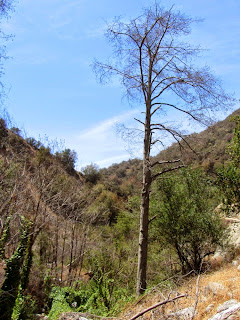 Dead tree in Fish Canyon