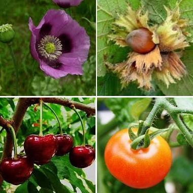 Espacios verdes: Morfología de las plantas, (II).