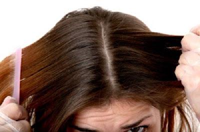 Comment renforcer ses cheveux avec ce conditionneur naturel fait maison