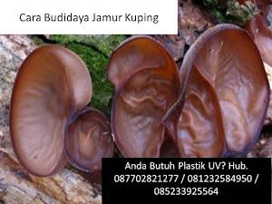 Cara Budidaya Jamur Kuping