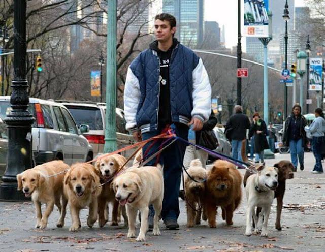 Cuidador y paseador de mascota