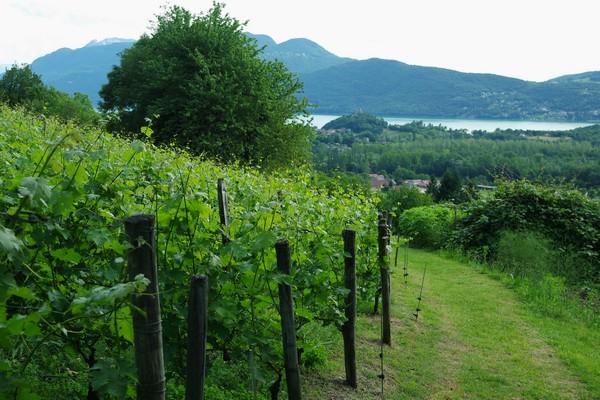 savoie randonnée chindrieux rochetaillée croix beauvoir lac bourget vignes