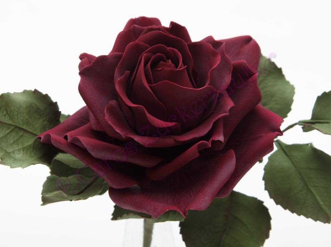 caros zuckerzauber blog zuckerblumen motivtorten und vieles mehr dunkelrote rose. Black Bedroom Furniture Sets. Home Design Ideas