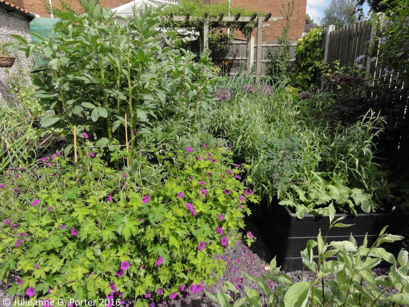 gwenfar s garden and other musings gardening me what s overview of the kitchen garden the broad beans flush health flowers geranium ann folkard in front