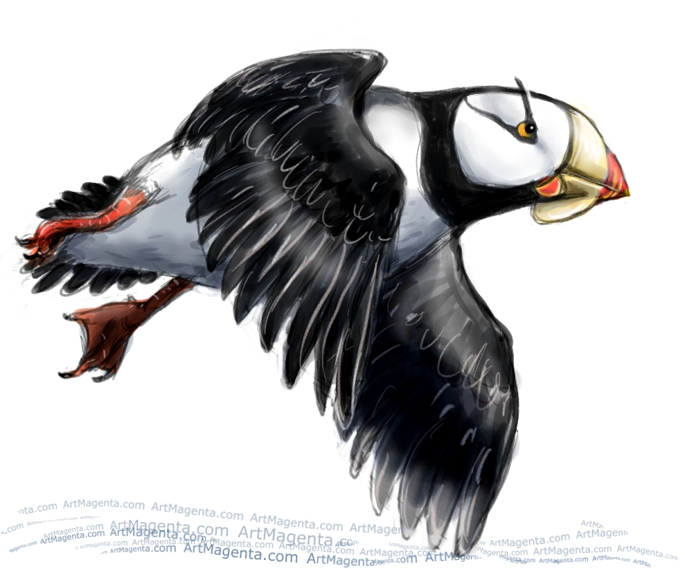 Horned Puffin sketch painting. Bird art drawing by illustrator Artmagenta