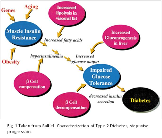 essay on type diabetes help cant do my essay type and type diabetes causes and adipose tissue