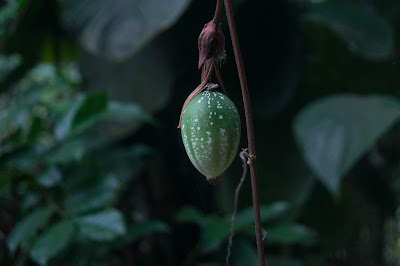 Photo of seed pod by Sebastian Seck on Unsplash