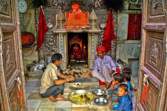 Templo dos ratos sagrados - Karni Mata - Índia