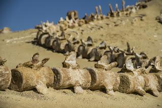 بالصور تعرف على متحف وادي الحيتان في مصر