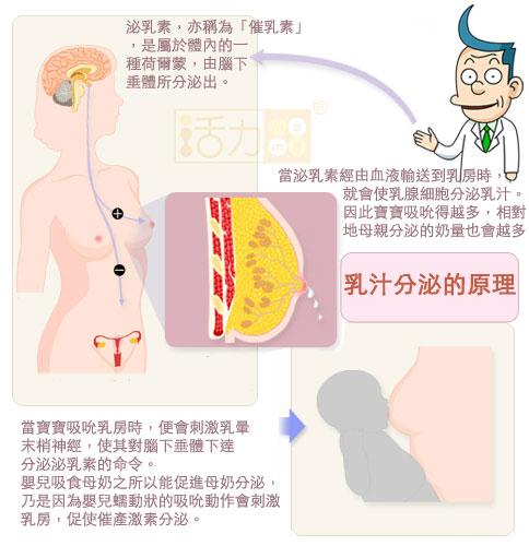 在餵食寶寶後分泌泌乳激素以製造下一餐。由乳頭來的感覺