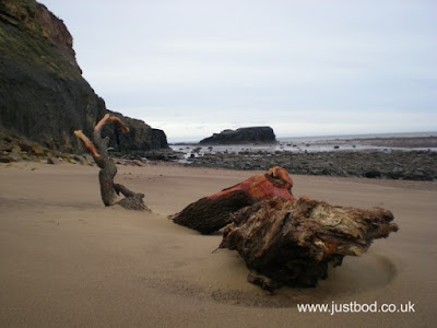 Washed up tree trunk on beach near Whitby