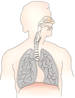 Pneumonia Symptoms, Causes, and Risk Factors