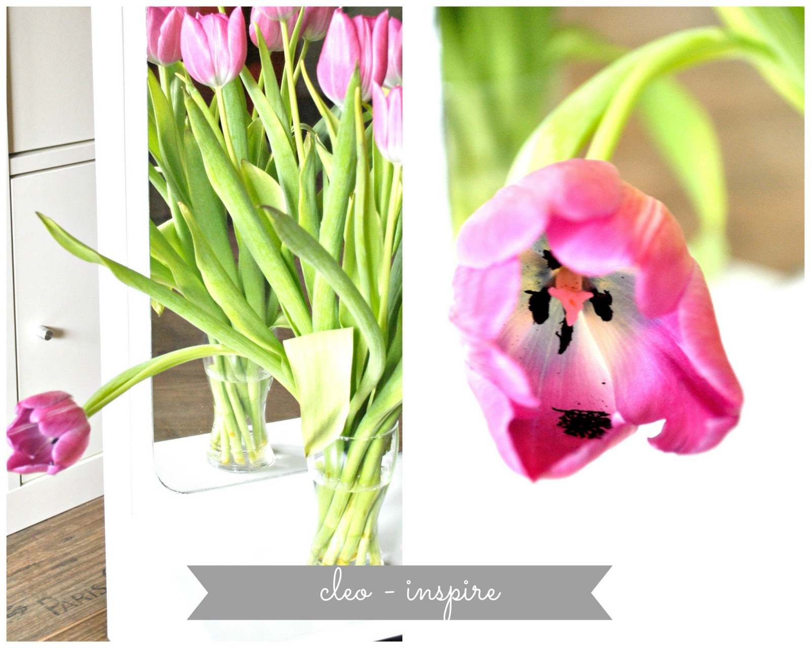 wiosna tulipany