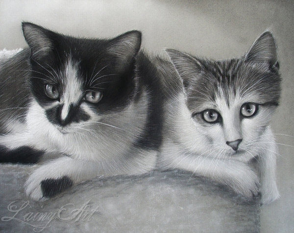 09-Rescue-Cats-Commission-Alaina-Ferguson-Lainy-Animal-Charcoal-Portrait-Drawings-www-designstack-co