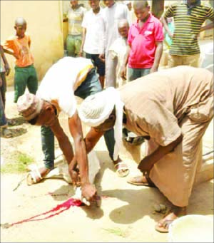 beggars sacrificed sheep pray against kaduna government