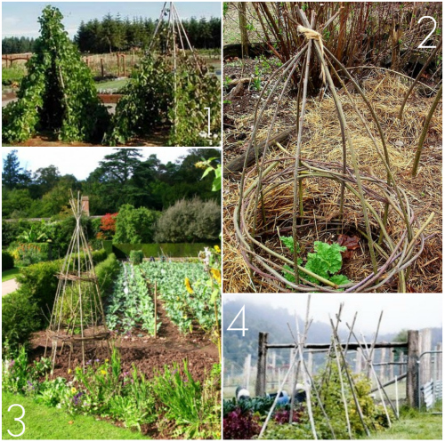 Bean Teepee. 2. Natural Rhubrab Cage. 3. Vegetable Teepee Support. 4.  Vegetable Garden Supports.
