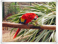 Macaw Parrot Bird Animal Pictures