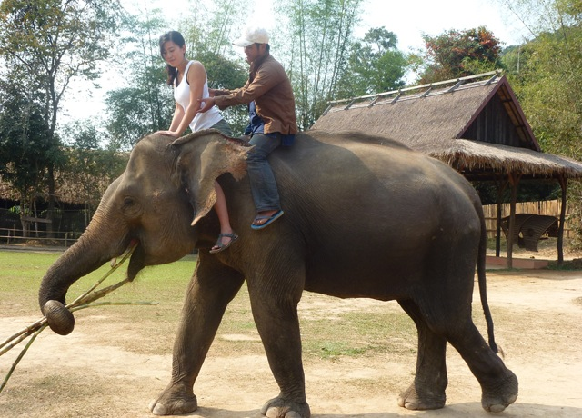 learn-to-become-a-mahout-in-laos