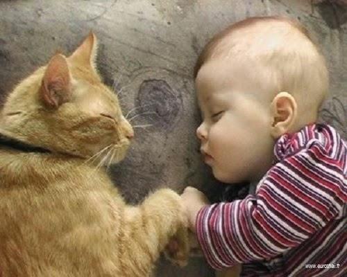 Bébé mignon et chat