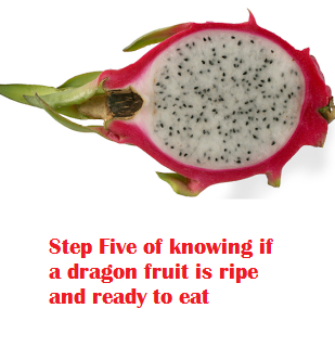 Step Five of knowing if a dragon fruit is ripe and ready to eat