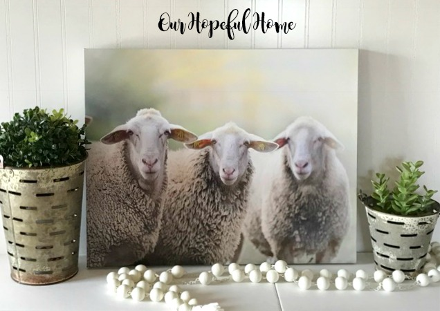 sheep trio photo canvas farmhouse decor