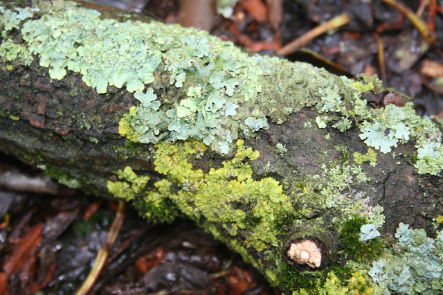 lichen and green algae relationship counseling