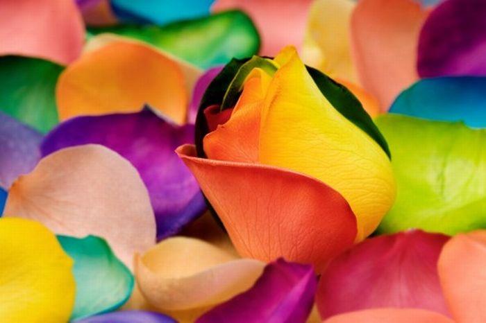 Flores de colores arco iris diseño digital