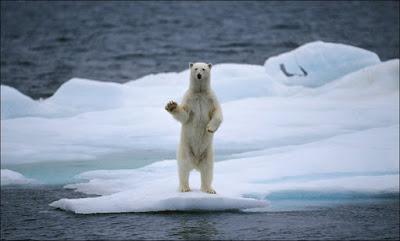 Scioglimento calotte polari