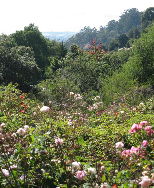 The Intrepid Tourist: UC Botanical Garden, Berkeley: A Plant Lover\'s ...