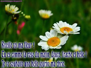 image bonjour