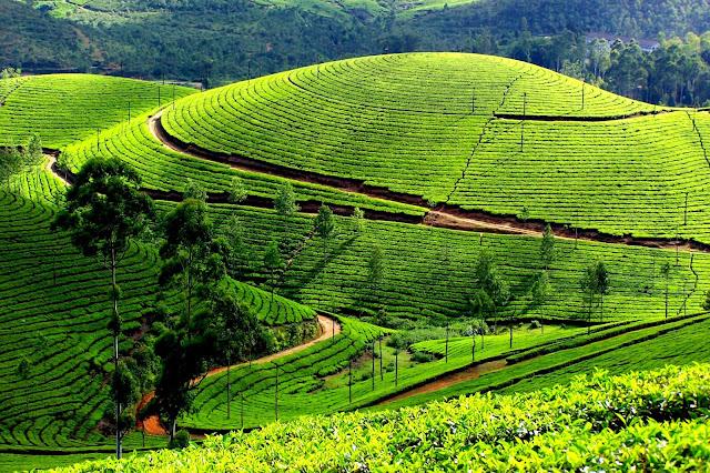 21-Munnar-Kerala