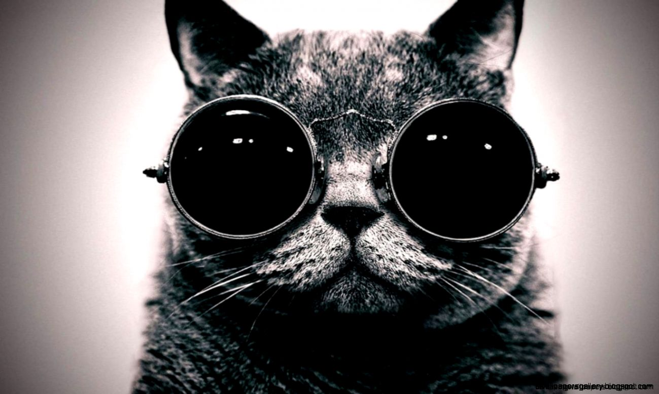 Cool Cat Tumblr   Wallpapers Gallery
