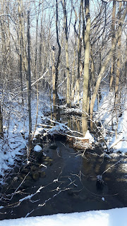 Parc du Bois-de-Liesse, arbres, forêt, neige, ruisseau
