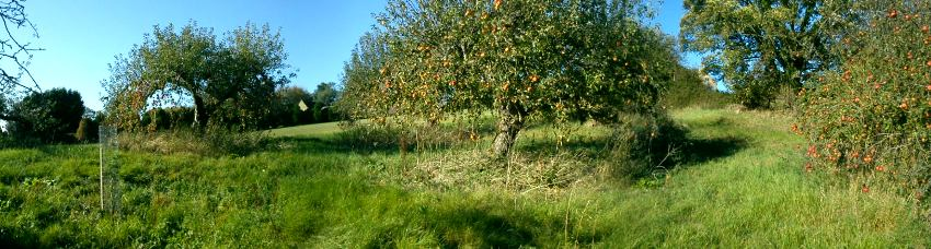 Restoring traditional orchards in Gloucestershire