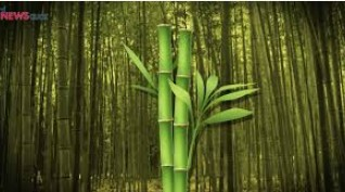 22 Best Bamboo Related Business ideas for 2019 - Business Plans